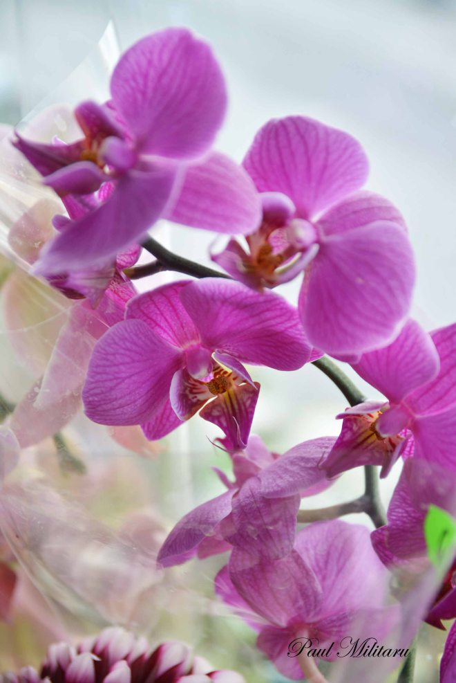 nature 7 orchids