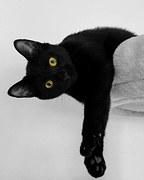 cat-195256__180