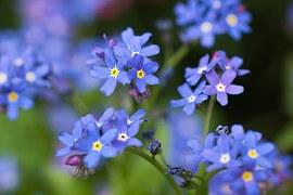 flowers-111569__180