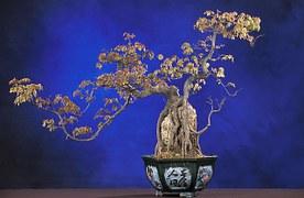 bonsai-62862__180
