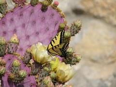 butterfly-93473__180