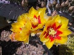 cactus-102290__180