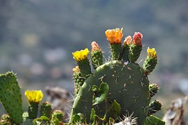 cactus-166240__180