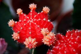 cactus-17721__180