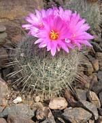 cactus-2117__180