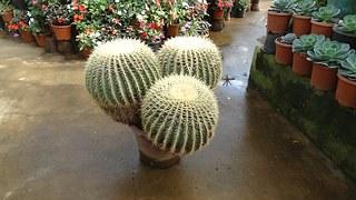 cactus-230754__180