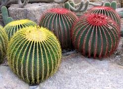 cactus-538813__180 Cactis Botanical Garden Nong Nooch