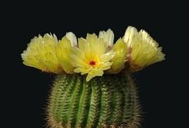 cactus-67547__180