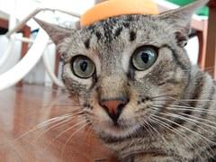 cat-633081__180