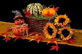 autumn-20461__180