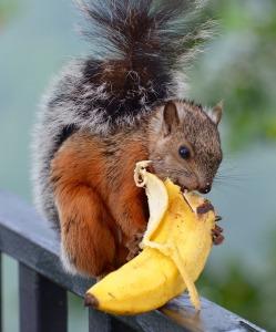 squirrel-1043536_960_720[1]