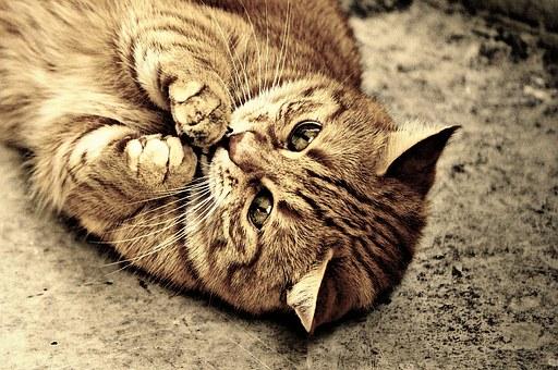cat-1054524__340[1]
