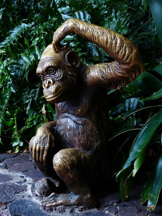 monkey-452864_960_720[1]