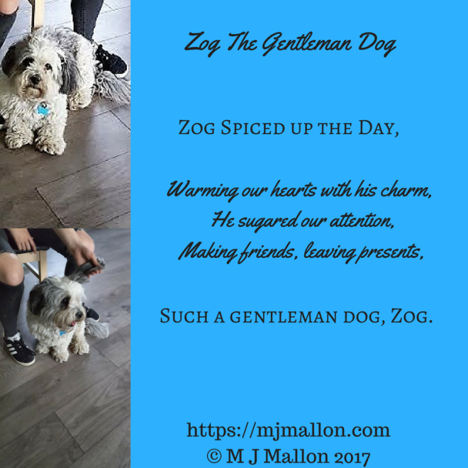 Zog The Gentleman Dog