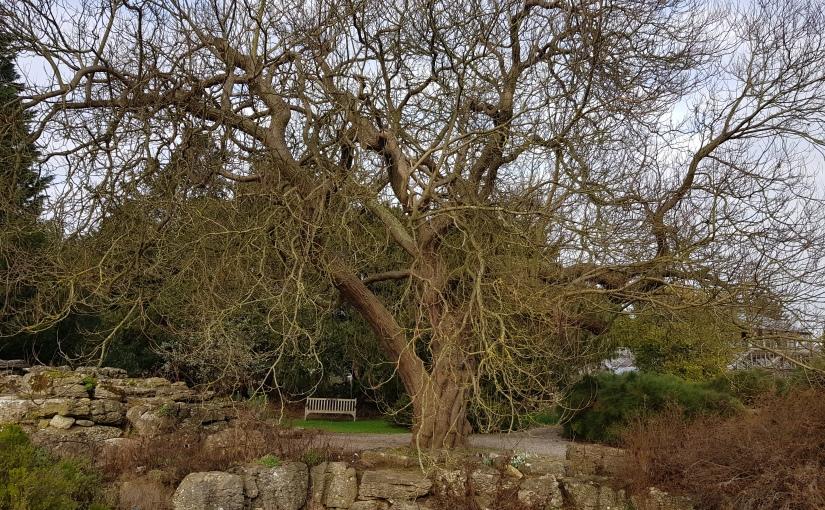 The Magic of Trees:Purpurea