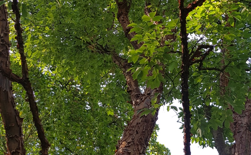 Colleen's 2019 Weekly #Tanka Tuesday #Poetry Challenge #Poet'sChoice #Etheree #Trees #Photography#Bookish