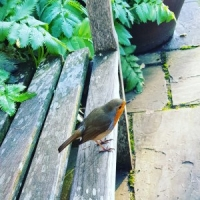 The Magic of the Robin #Spirit #Animal #Encounters #Poetry - Spiritual Sisters - Sisters of The Fey