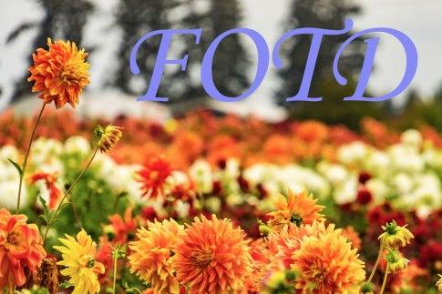 #Coronavirus #COV19 #Photography #Sunday Stills #FOTD #Uplifting #FloralPhotography